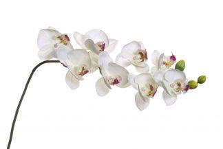 8J-1219S0003 Valge orhidee 85 cm