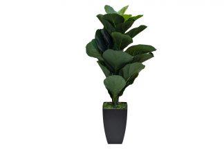 29BJ-910-29 Ficus potis 90 cm
